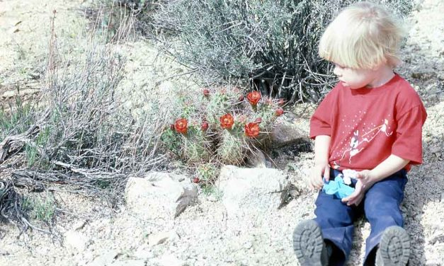 Natural Learning: Seeing nature through a child's eyes