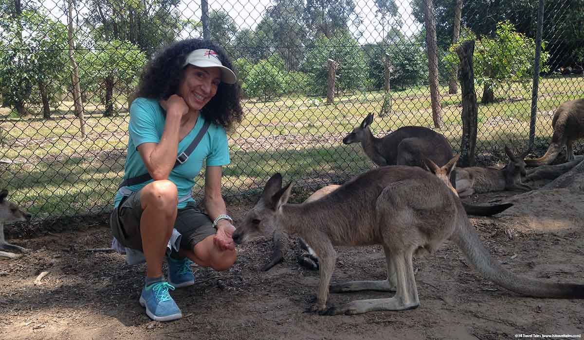 Feeding the kangaroos at Lone Pine Koala Sanctuary