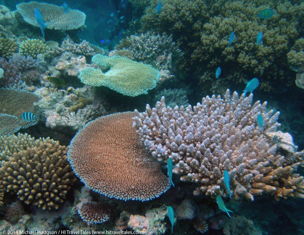 snorkeling in Fiji reveals a wonderful world just feet below the surface