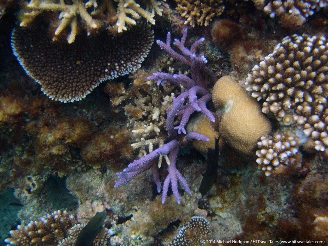 Snorkeling in Fiji full of color
