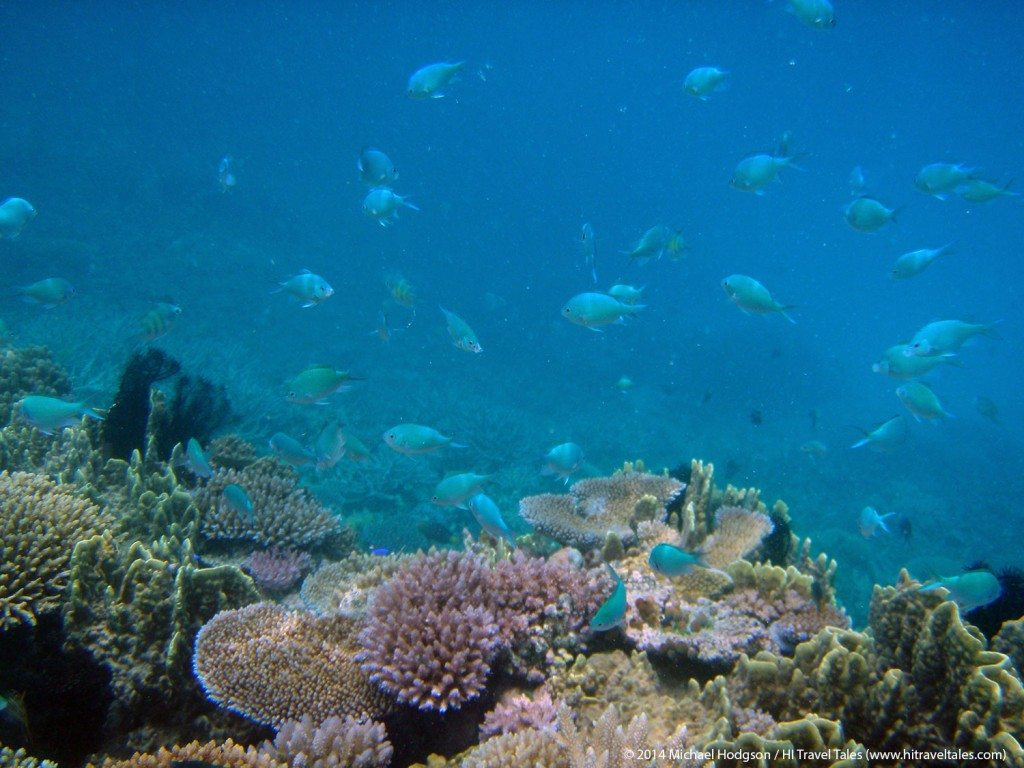 snorkeling in fiji is a visual feast of color