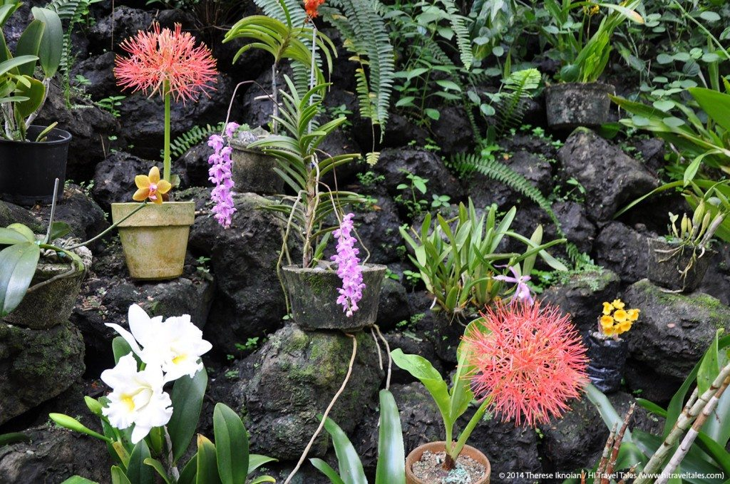 Wandering along canopy-covered boardwalks and paths winding through rainforest, all the while gawking at over 2,000 varieties of Asian orchids and Cattelya hybrids is an amazing experience.