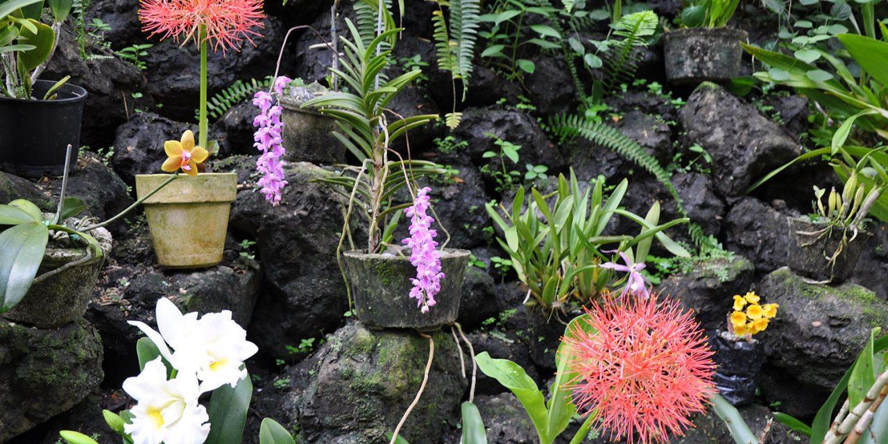 Fiji's Garden of the Sleeping Giant: Orchids forever!
