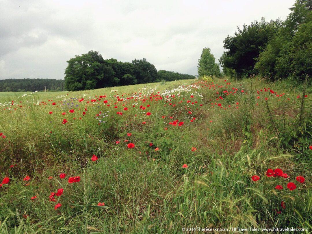 Wildflowers carpeted the fields we ran through as we followed paths through farmland toward the Watch Tower.