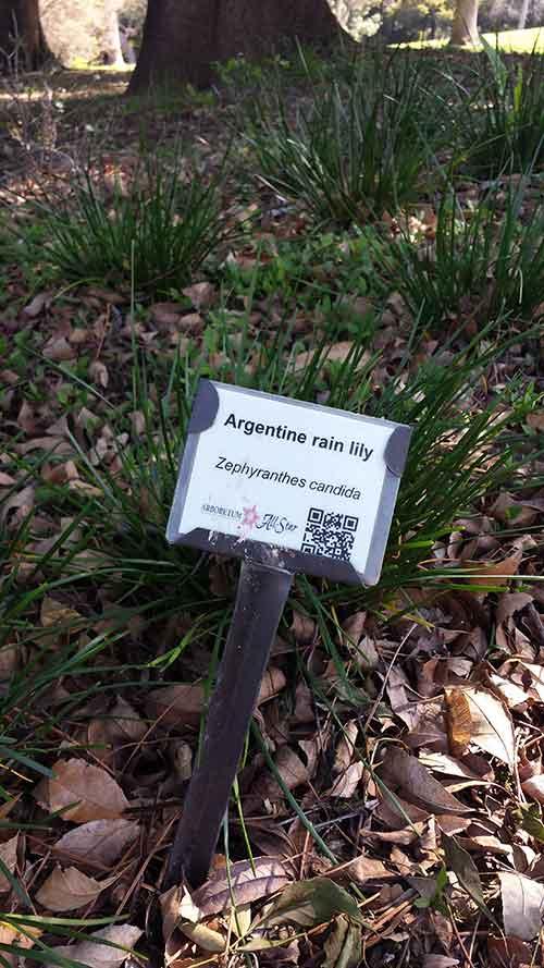 UC Davis Arboretum plant signage is tops