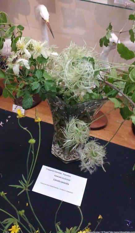 Monterey wildflowers clematis