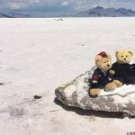 Teddy & Friends: traveling stuffed animals