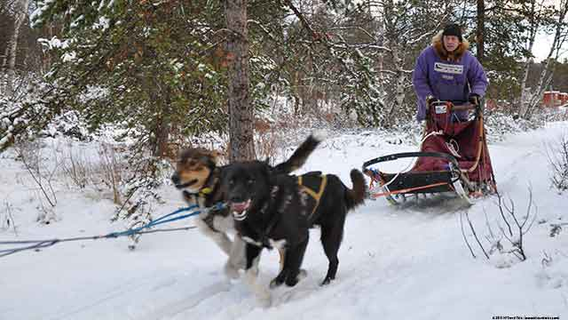 Alaskan Husky Tours dog sledding in Norway