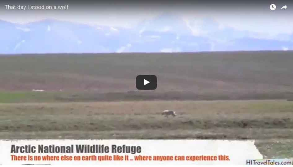 That day I stood on a wolf in ANWR