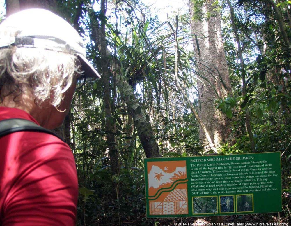 Michael reads a sign about the Kauri tree in Koroyanitu