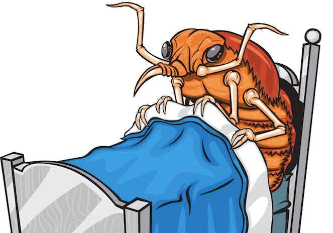 Tips for avoiding bed bugs features a cartoon of a bed bug in bed