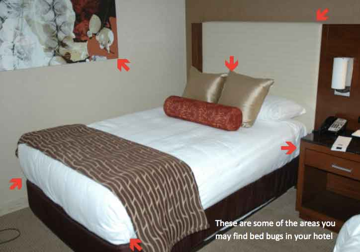 Do Bed Bugs Travel On Floor