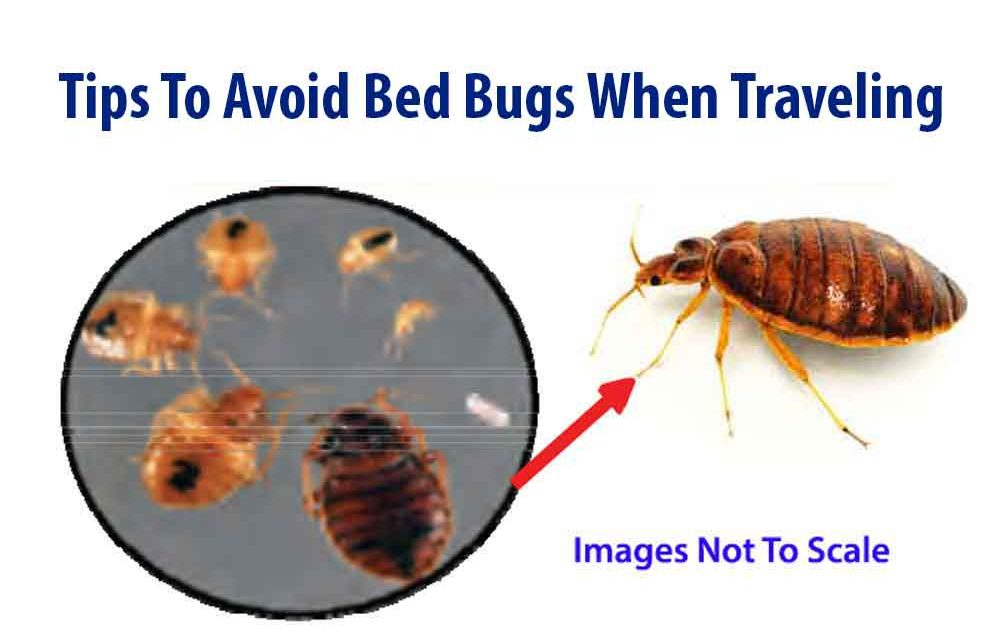 Bed Bugs International Travel