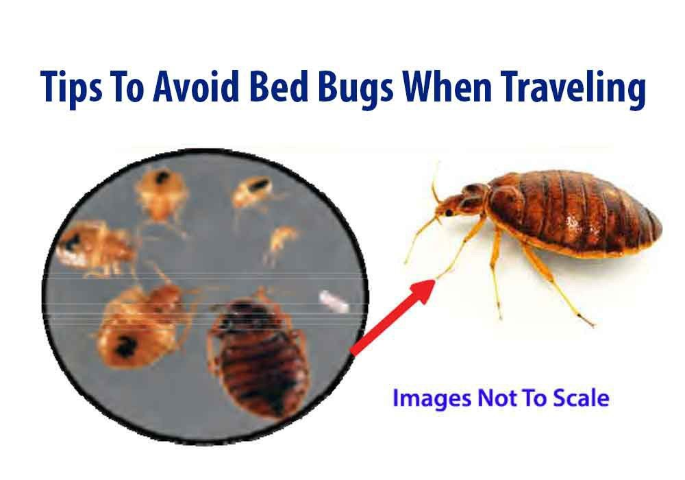 Tips to avoid bed bugs when traveling