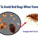 8 tips to avoid bed bugs when traveling