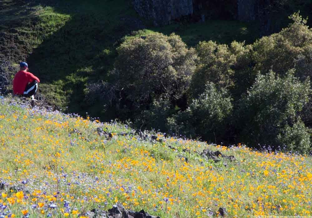 Enjoying wildflowers and the stream at Table Mountain.