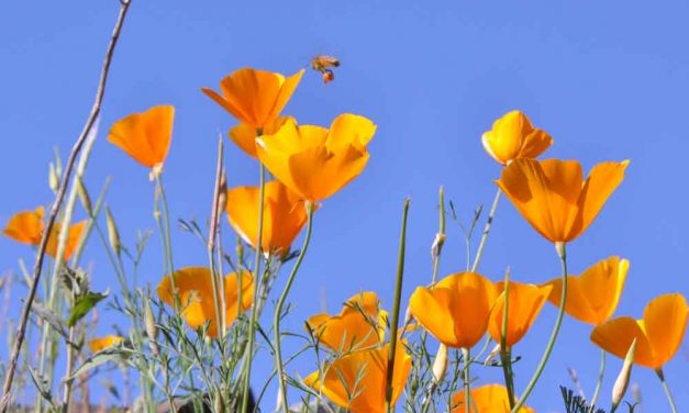 Table Mountain Preserve – wildflowers and waterfalls