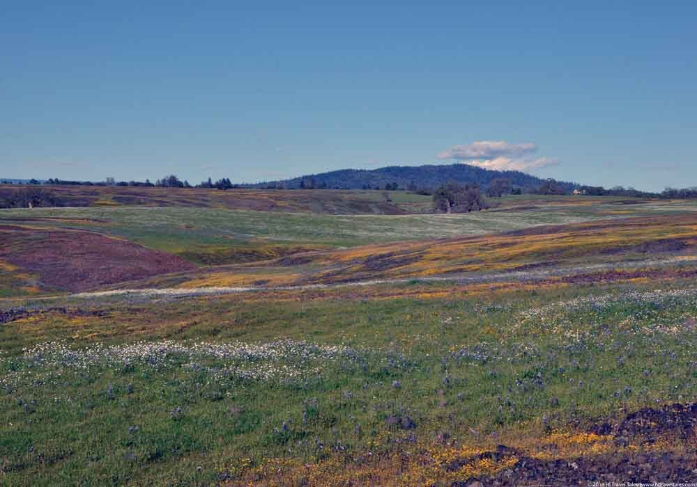Table Mountain preserve is part plateau filled with wildflowers