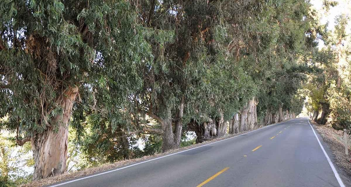 A Road Trip: Refuge of the roads