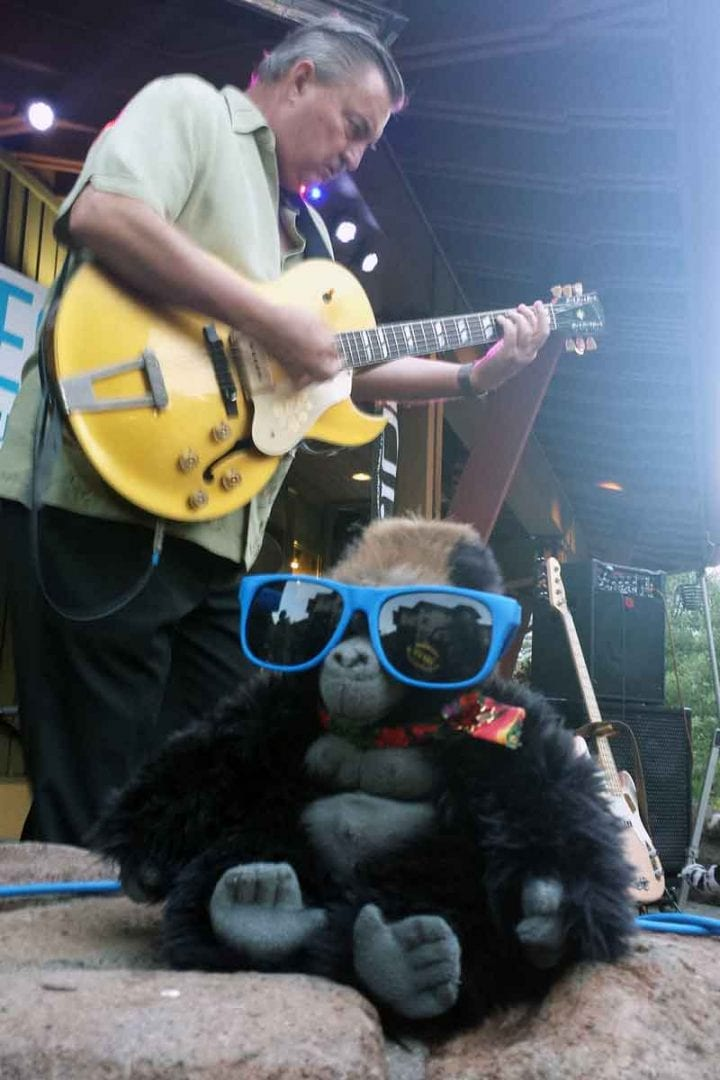 JoJo enjoys a front row seat to Charles Baty Blues on tour in Squaw.