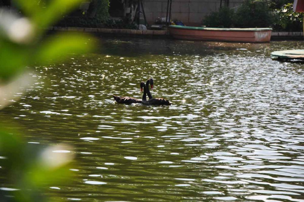 Green Lake is one of the top 6 things to do in Kunming.