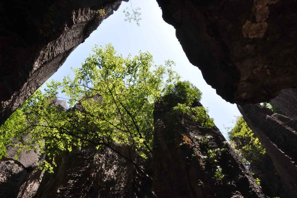 Stone Forest secret valley.
