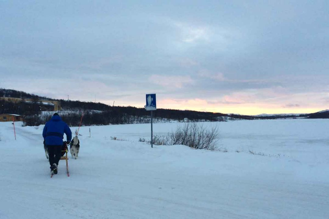 Dog sledding in the Kirkenes Recreation Area.