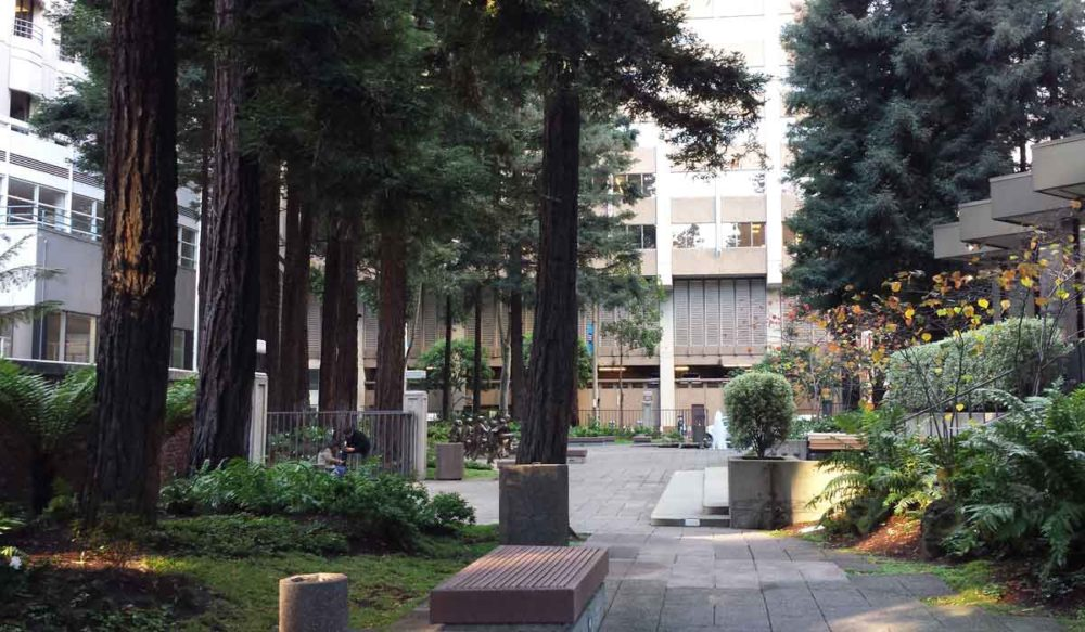 The TRANSamerica Redwood park is one of many wonderful San Francisco secret gardens waiting to be discovered.