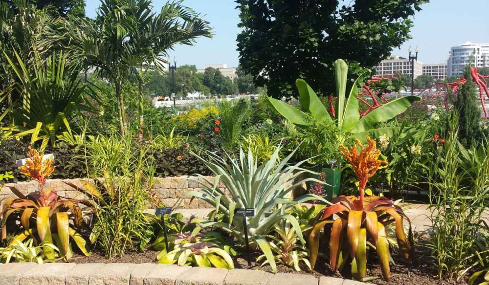 One of the more colorful six things to do in D.C. involves visiting the U.S. Botanical Garden.