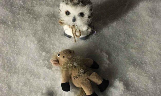 Teddy Bear Wisdom: Travel with your best friend