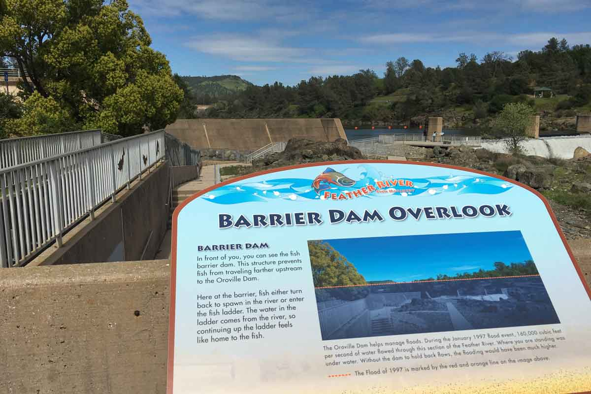 Feather River Fish Hatchery Also Flooded In 1997 At The Barrier Dam