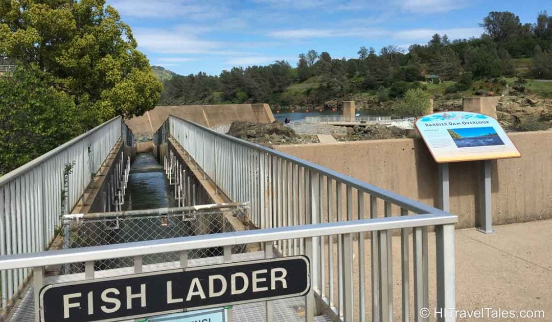 Feather River Fish Hatcher fish ladder.