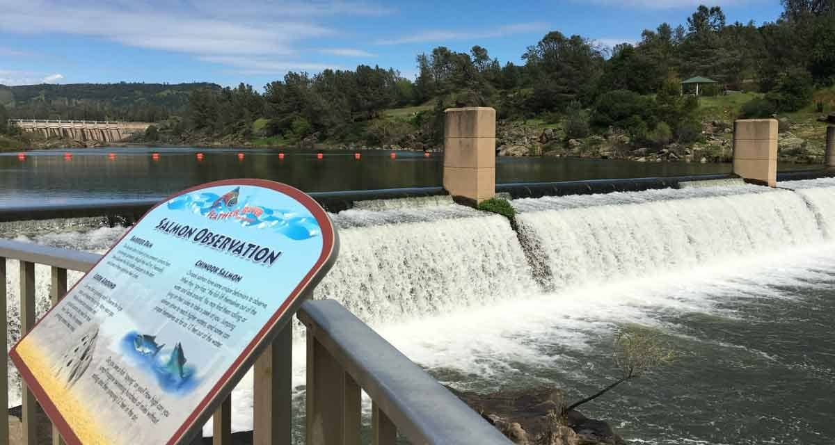 Feather river fish hatchery fish saved from oroville dam for Feather river salmon fishing