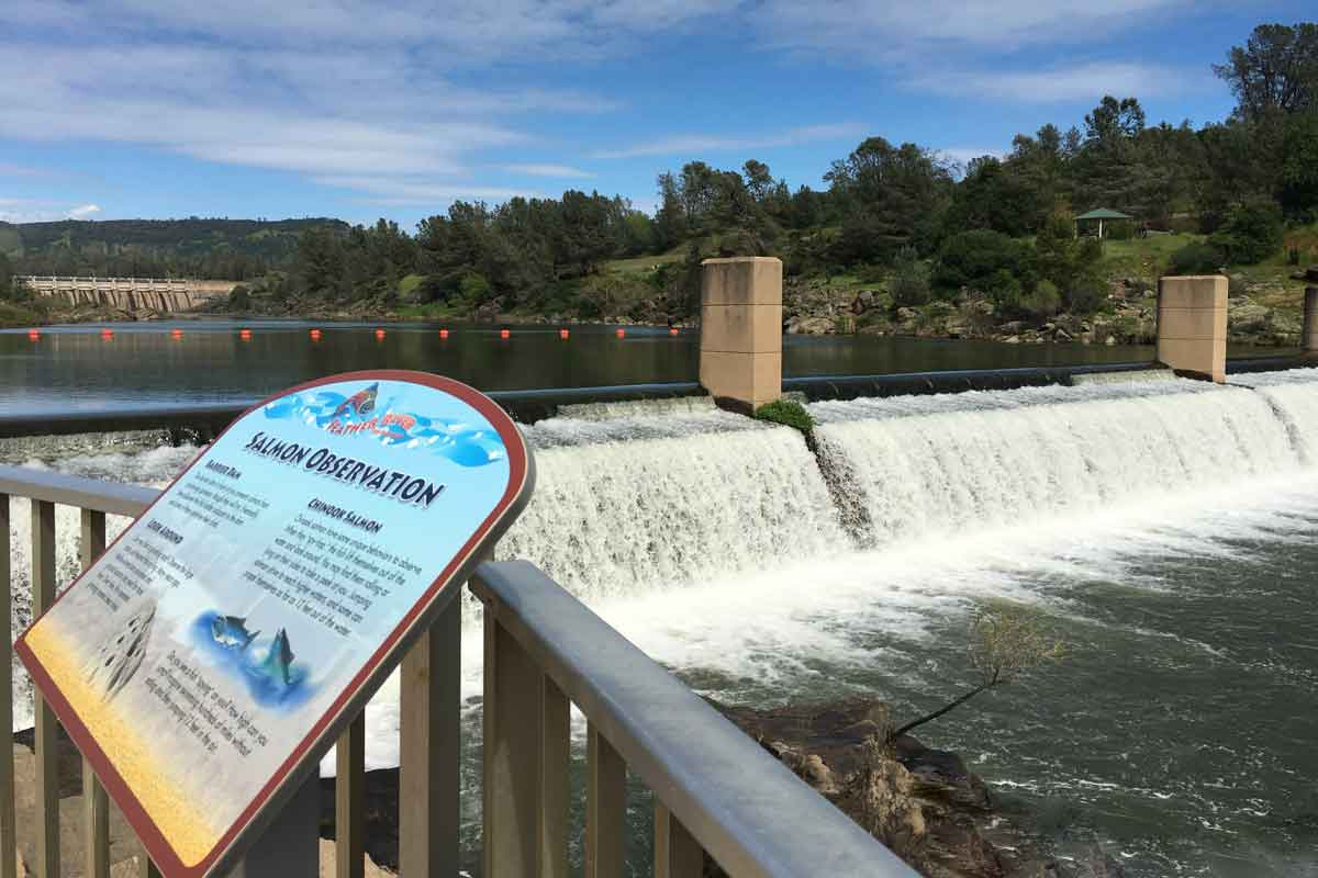 Feather River Fish Hatchery Fish Saved From Oroville Dam