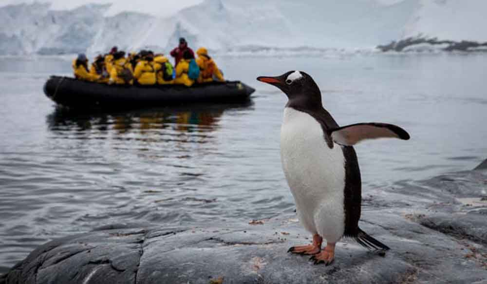 Viewing penguins in the Antarctica from a Zodiac.