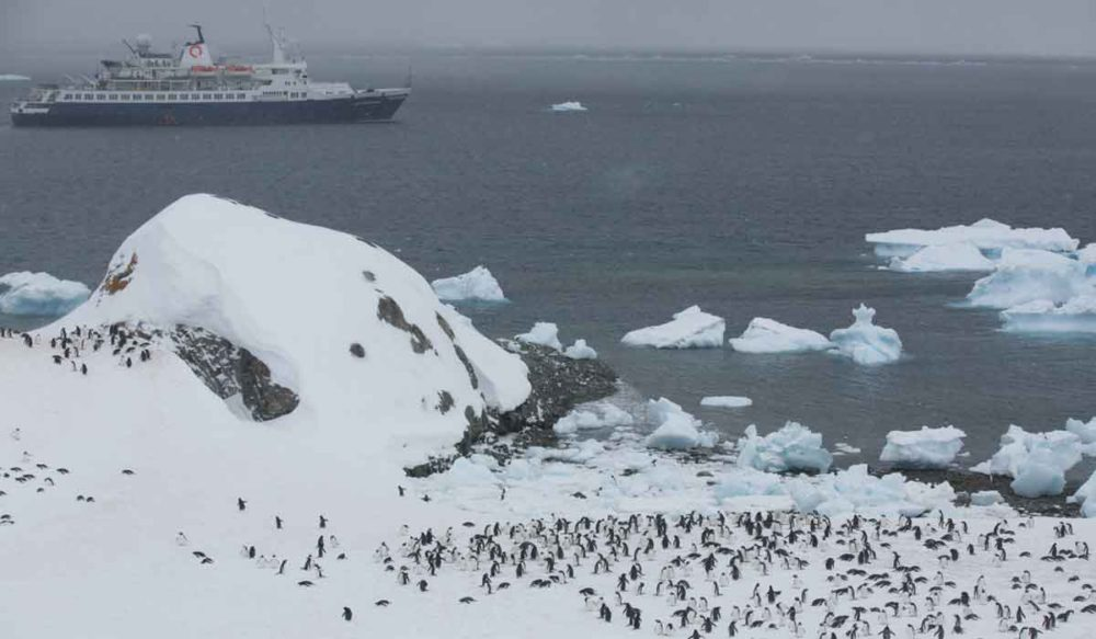Thousands of penguins in Antarctica as a Quark ship passes.