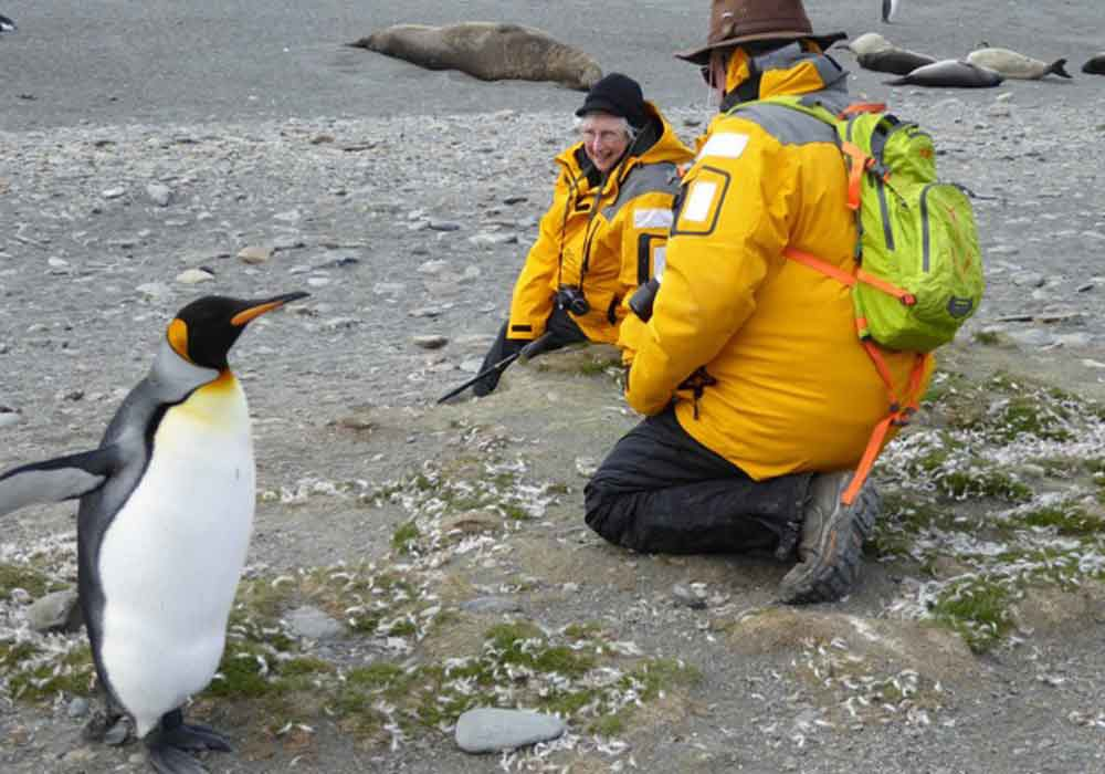 Ellen Schwab close to a king penguin on her visit Antarctica adventure.