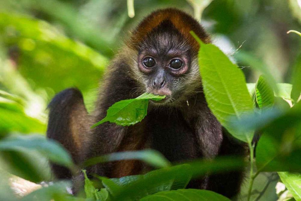 Wildlife in Costa Rica.