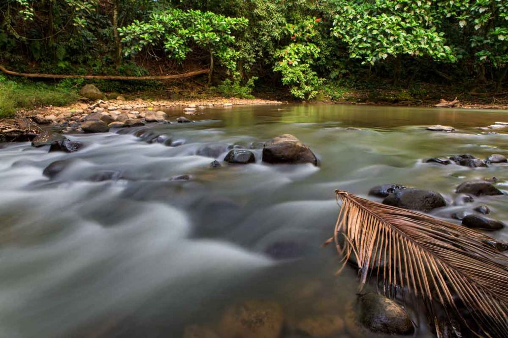 Stream in Costa Rica.