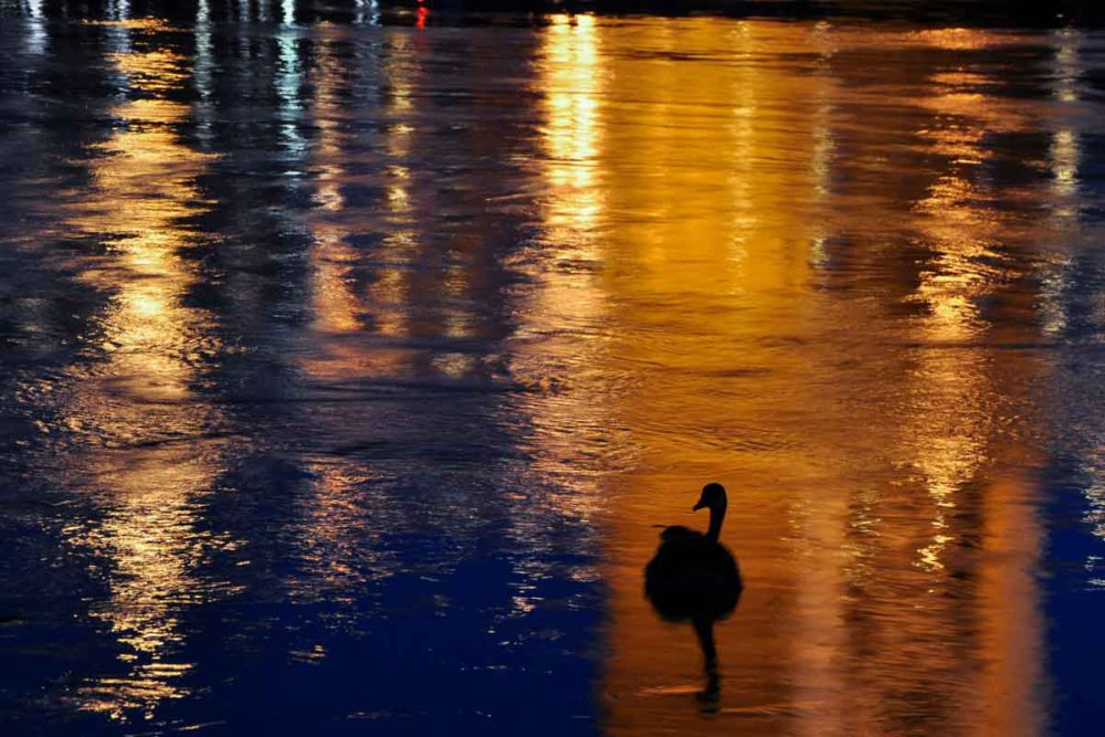 Old Sacramento river reflections with a goose at night.
