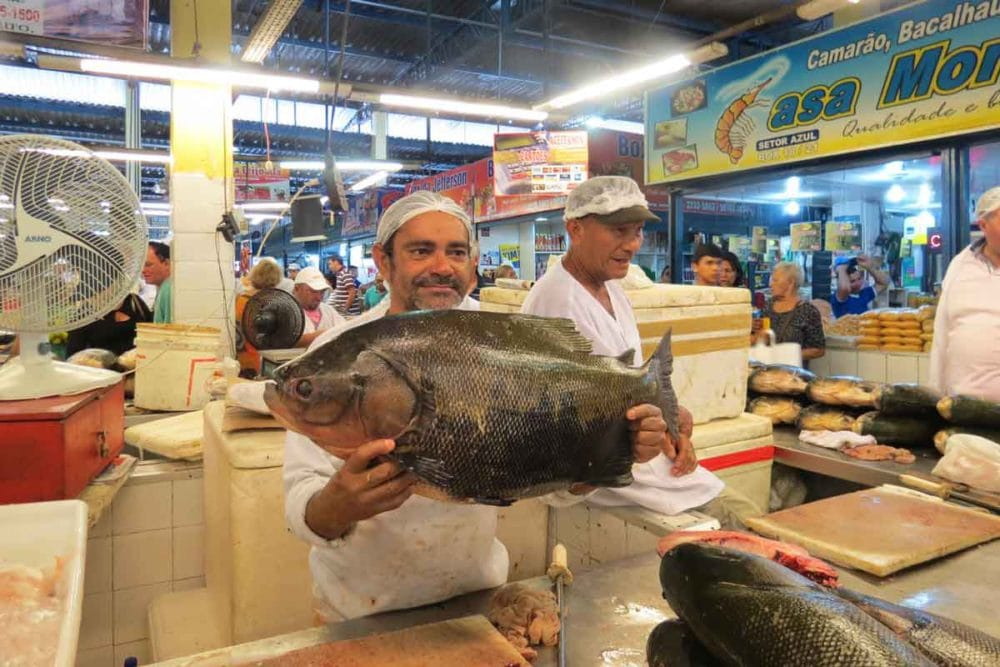 Now that is a big fish! In the fish market at Manus.