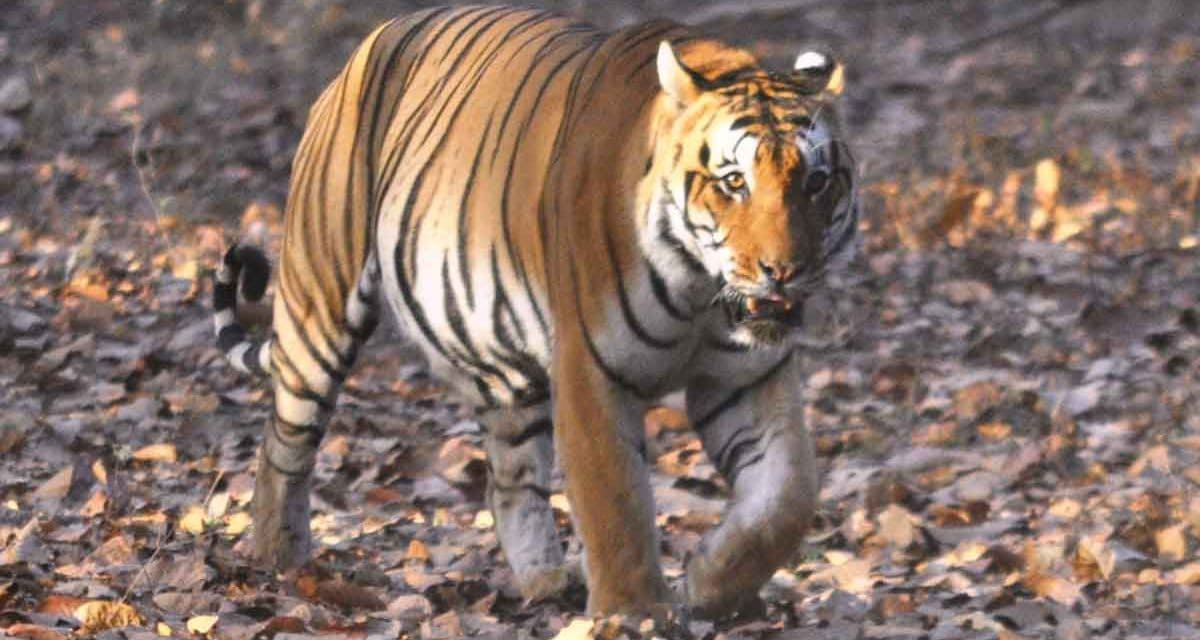 On safari in India to see tigers, and much more