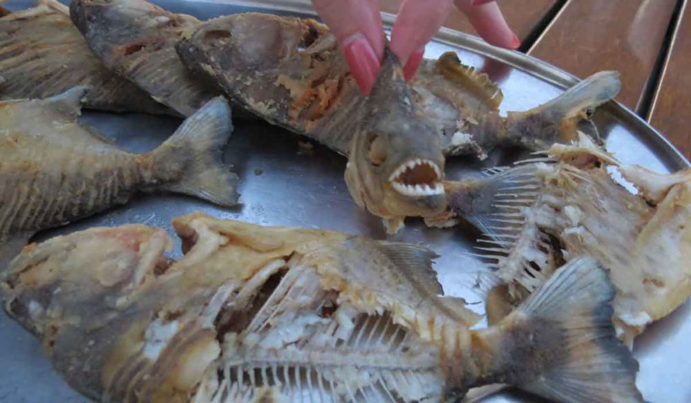 Piranha appetizer on the Amazon and Pantanal adventure with Journeys International.