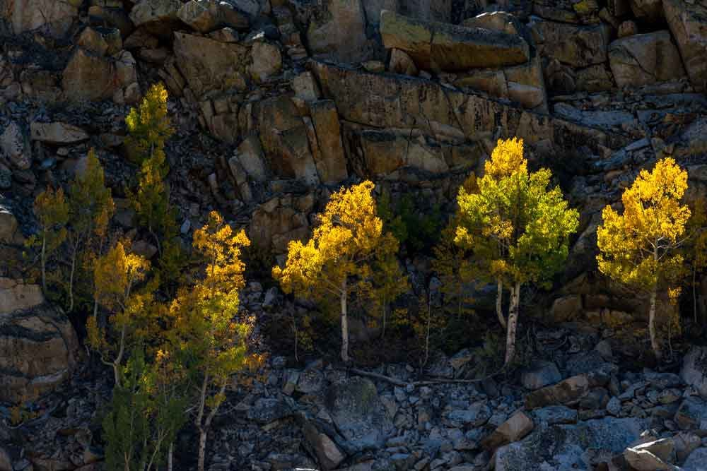 Using the light in Bishop Creek Canyon for fall colors.