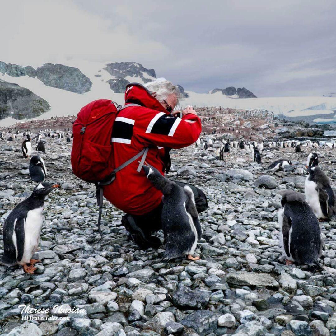 Cuverville Penguin Attack