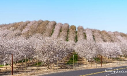 Modesto Almond Blossom Cruise a California road trip delight