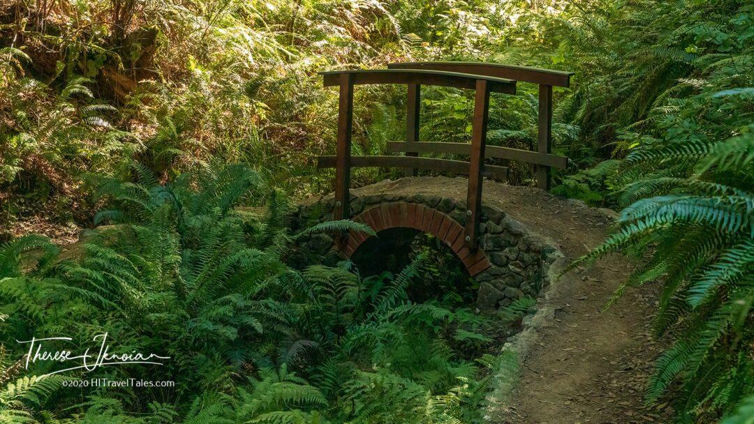 Arch Stone Bridge Skunk Train Redwods Hike
