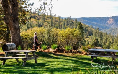 Plan a trip to California Gold Country: A Gold Rush road trip