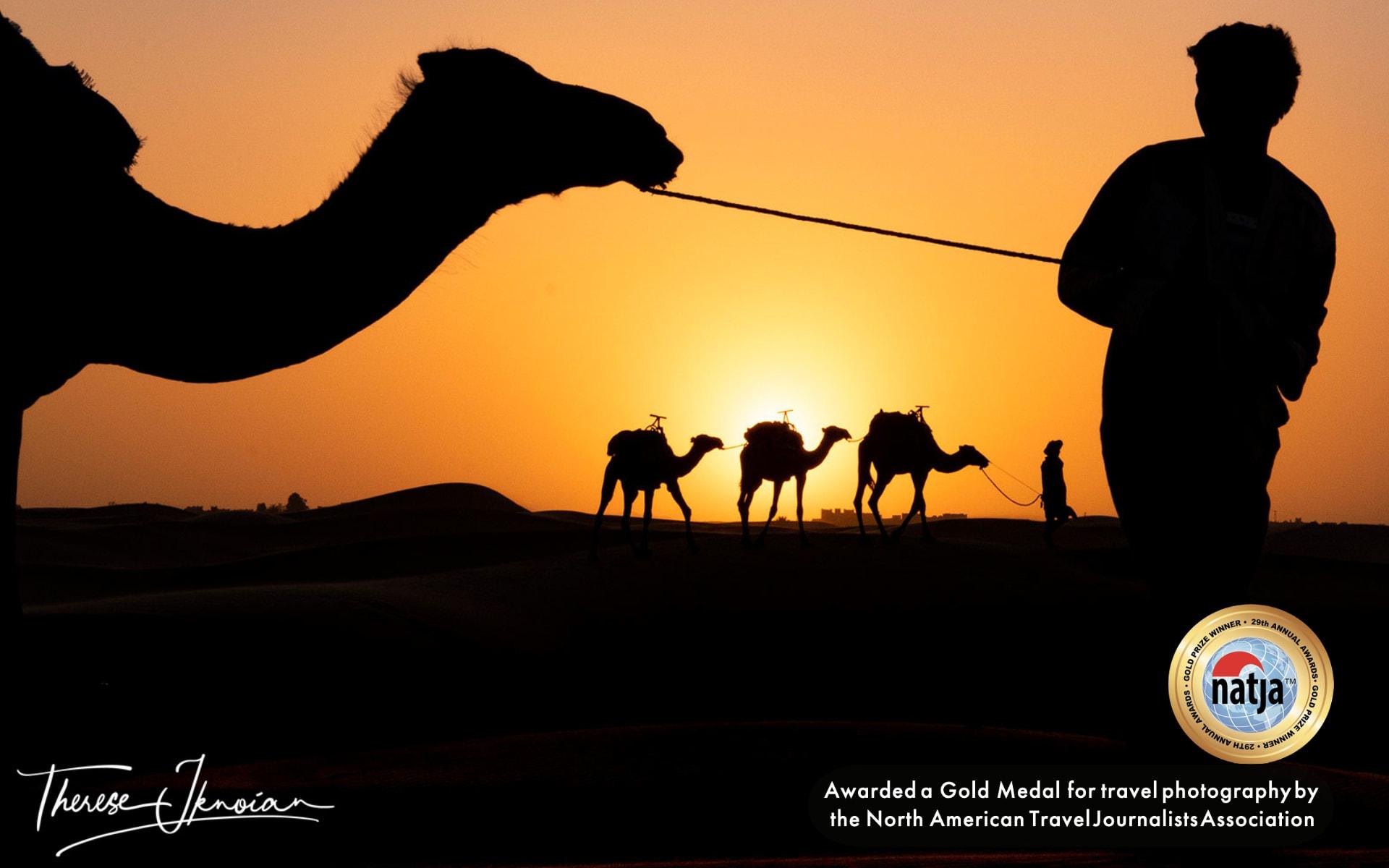 Camel Silhouette Sahara Gold Medal