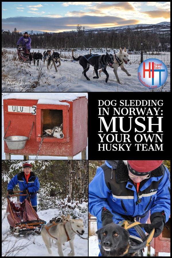 Dog Sledding In Norway Mush Your Own Husky Team
